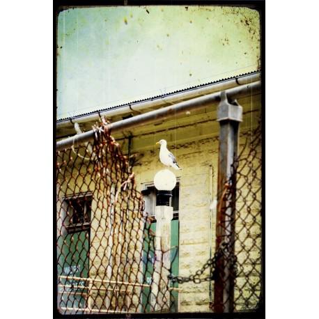 VINTAGE 20 H Alcatraz 2007