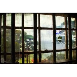 VINTAGE 31 L Alcatraz 2007